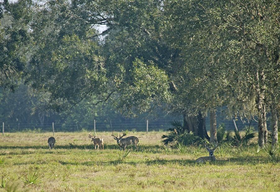 Rock_Lake_Ranch_Cover_Deer.jpg