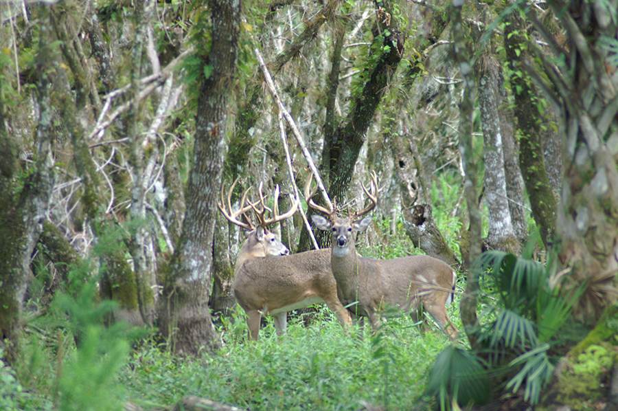 Rock_Lake_Ranch_Large_Bucks.jpg