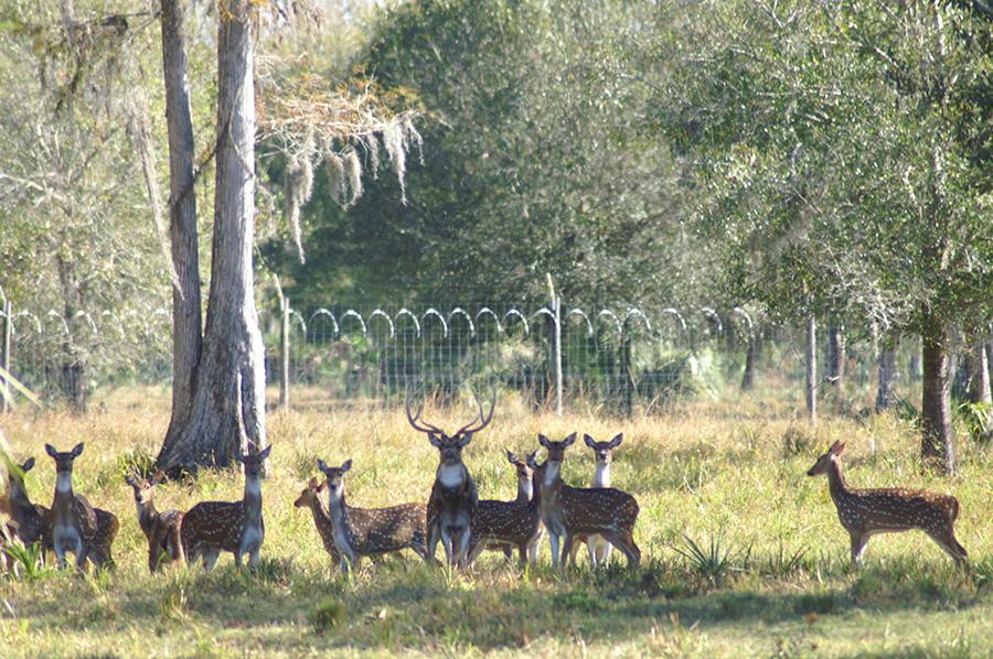 Rock_Lake_Ranch_Many_Deer.jpg