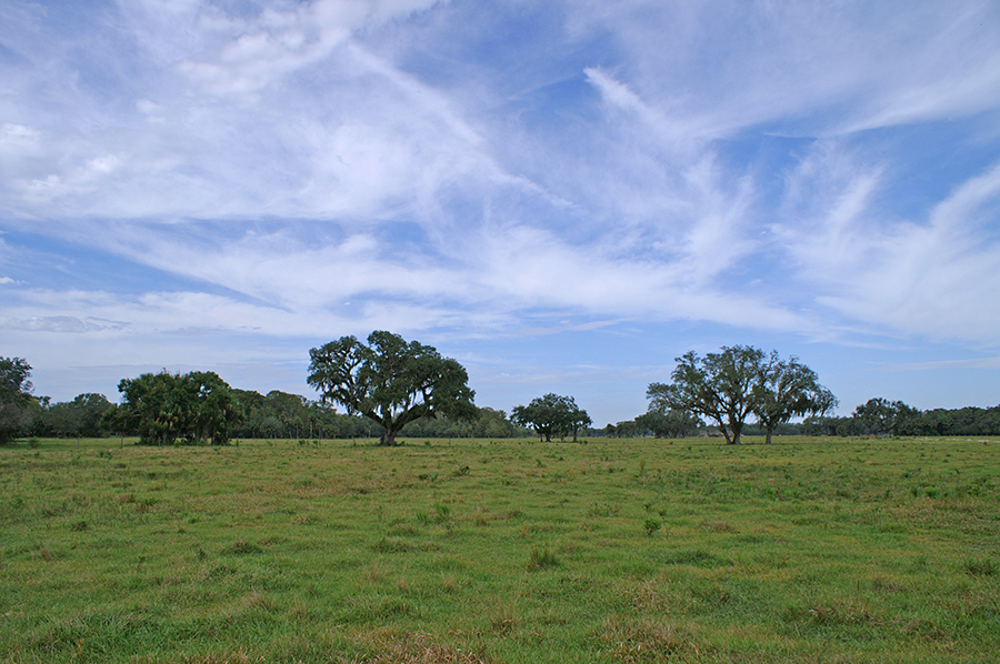 Rock_Lake_Ranch_Pasture.jpg