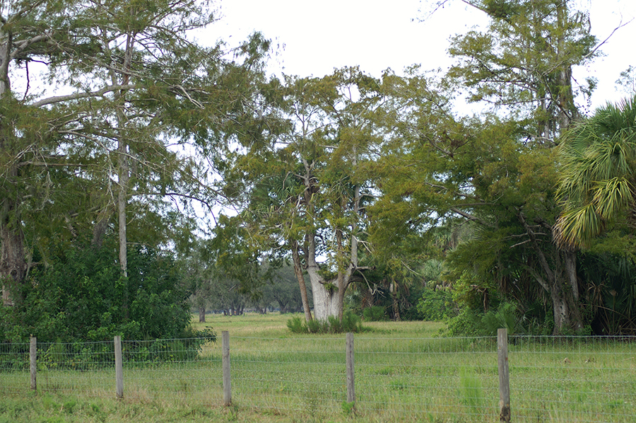 Rock_Lake_Ranch_Tree.jpg
