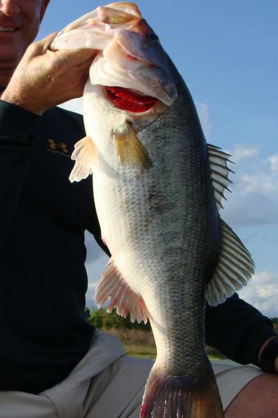 Osprey_Point_Trophy_Bass_Lake_Big_Fish_4.jpg