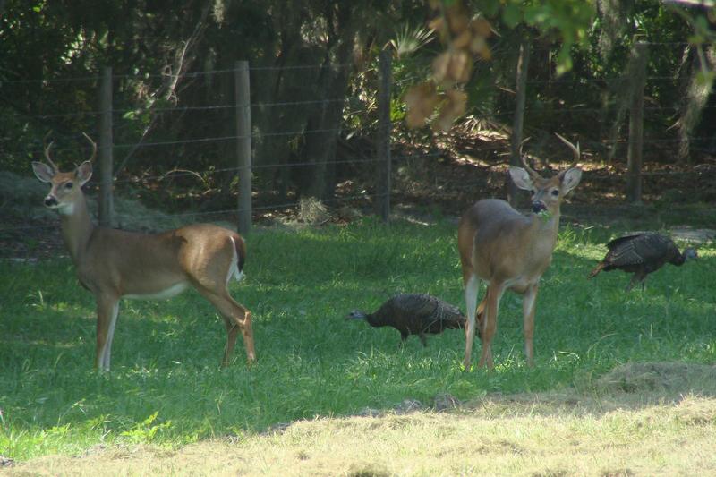 Osprey_Point_Trophy_Bass_Lake_Deer_Turkeys.jpg