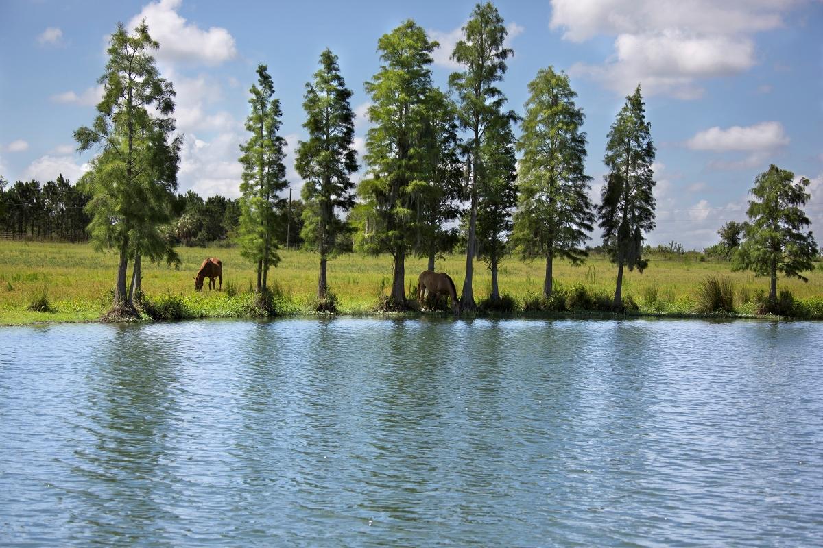 Osprey_Point_Trophy_Bass_Lake_Horses.jpg