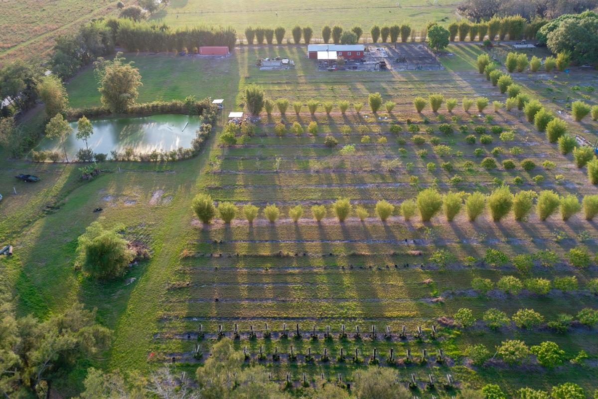 Martin_County_Lychee_Grove_Aerial_Photo.jpg