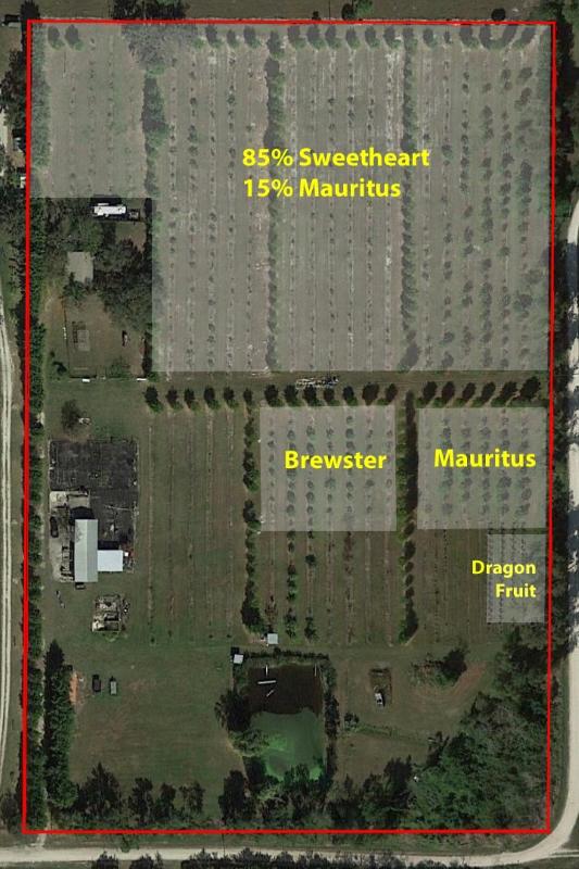 Martin_County_Lychee_Grove_Grove_Map.jpg
