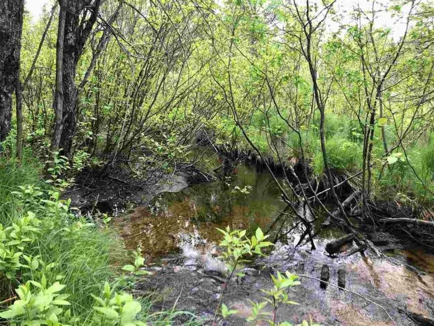 view_creek.jpg