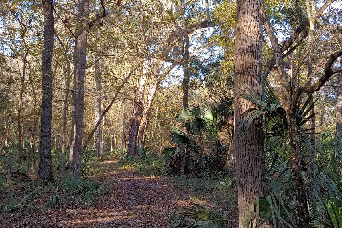 Hernando_County_House_and_Acreage_Woods_1.jpg