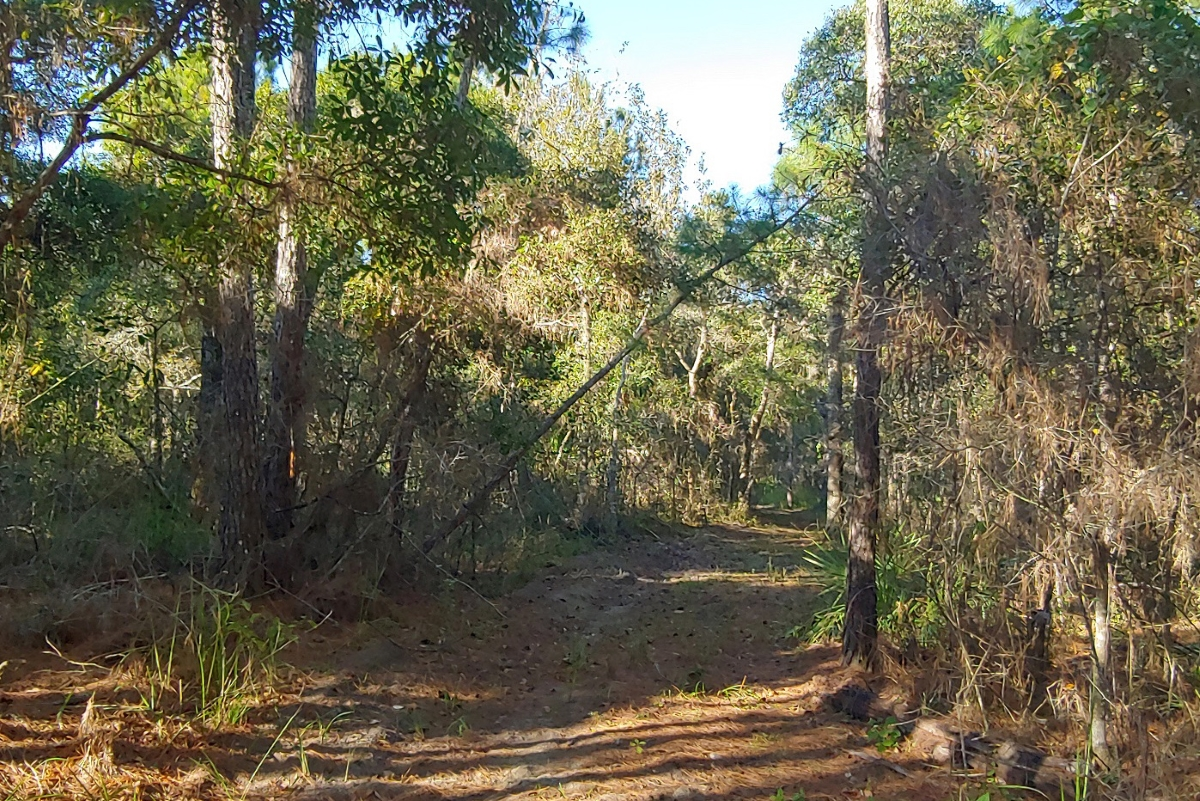Hernando_County_House_and_Acreage_Woods_2.jpg