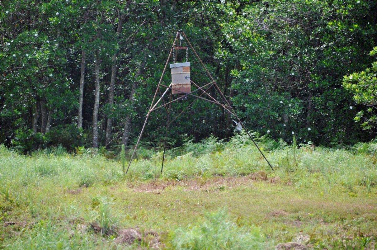 04_Sebring_461_Acres_Hunting.jpg
