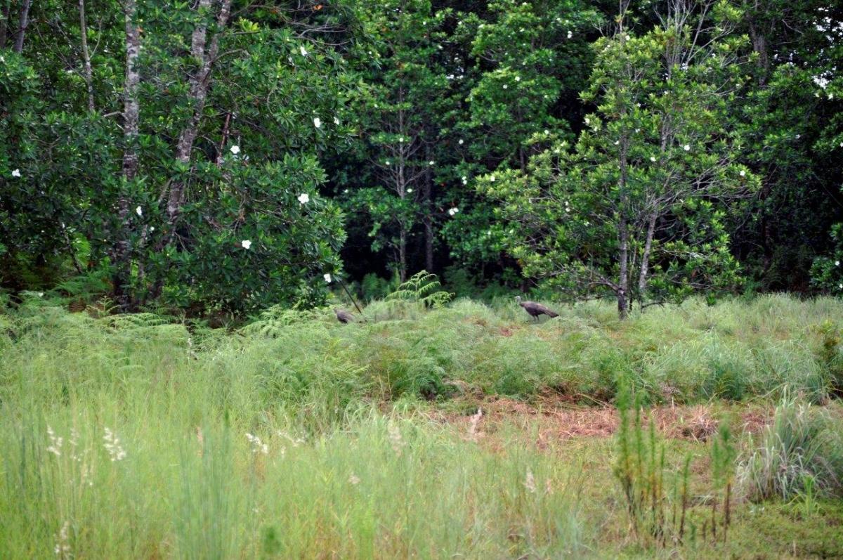 05_Sebring_461_Acres_Hunting.jpg