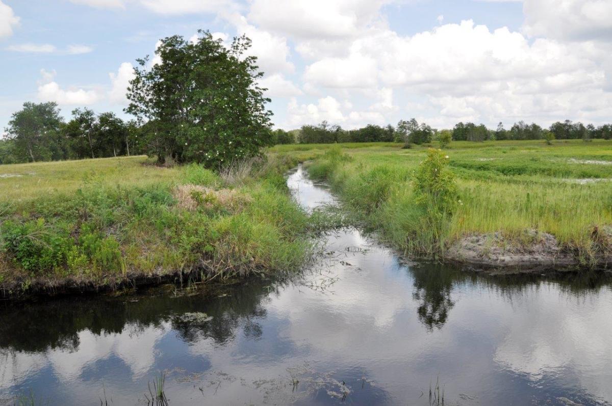 08_Sebring_461_Acres_Hunting.jpg