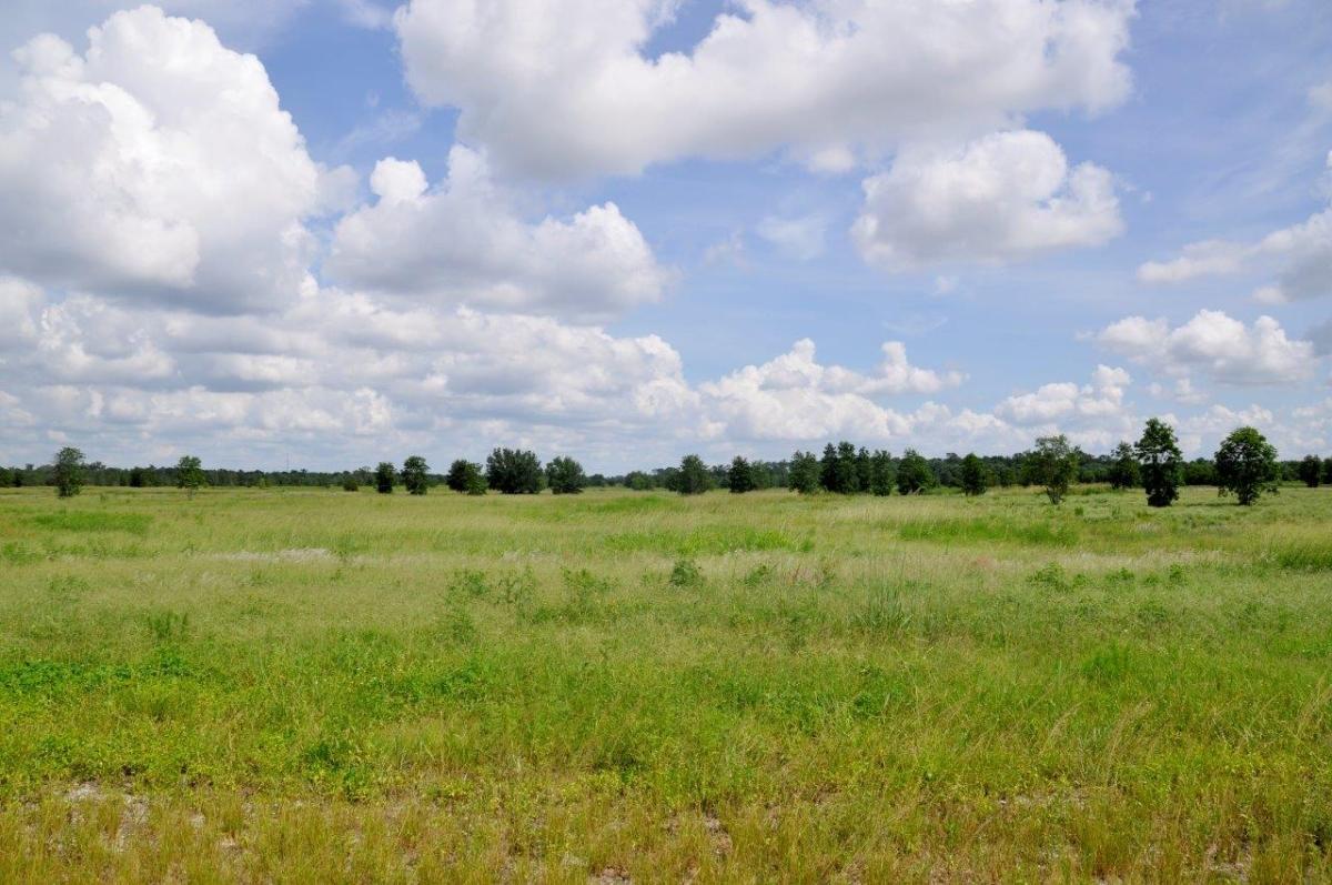 10_Sebring_461_Acres_Hunting.jpg