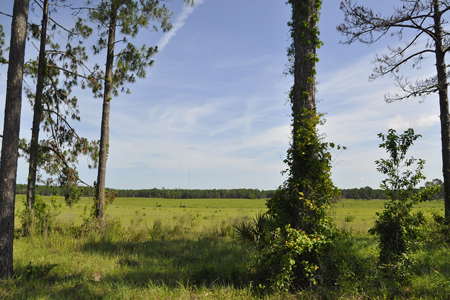 4_Pasco_County_Mixed_Use_332_Field_with_Trees.jpg