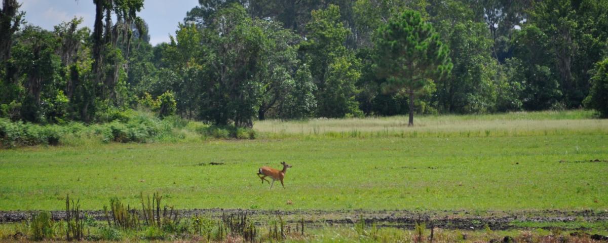 Sebring_461_Acres_Ground_Cover.jpg