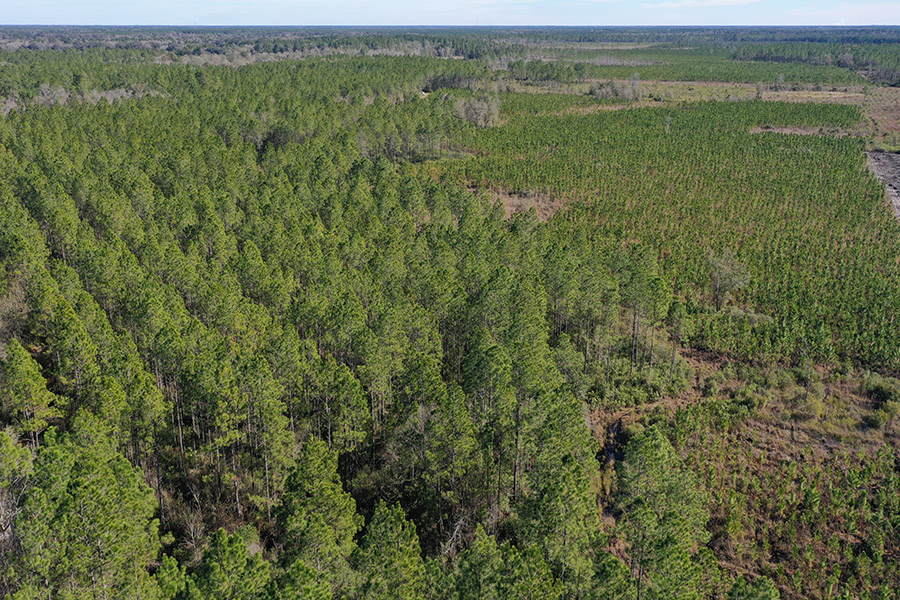 2_Alachua_County_Hunting_Timber_Tract_Aerial.jpg
