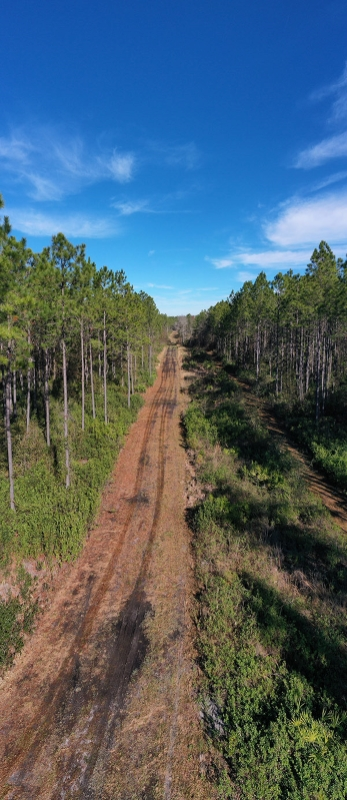 3_Alachua_County_Hunting_Timber_Tract_Trail.jpg