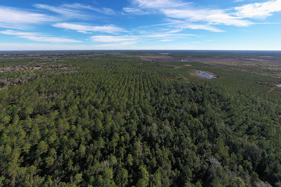 4_Alachua_County_Hunting_Timber_Tract_Timber_Aerial.jpg