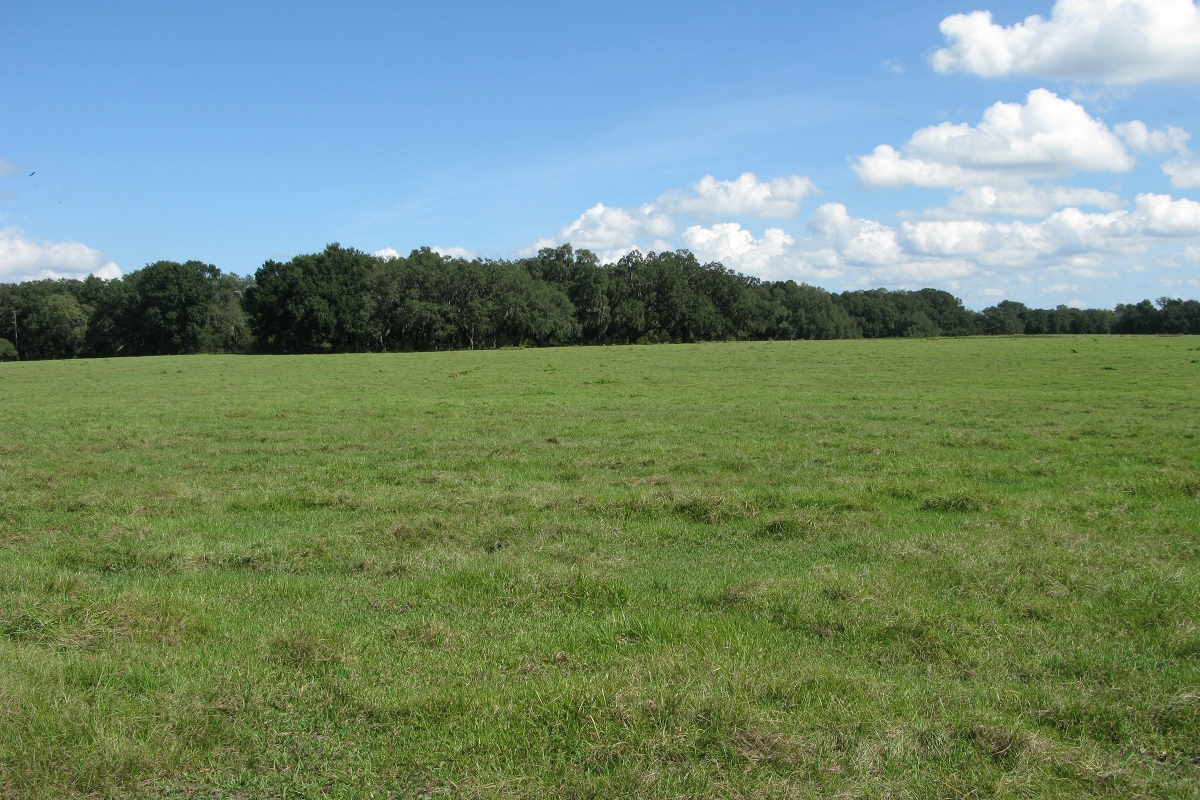 26_Acres_on_US_98_for_Residential_Development_Ground_Photo.jpg