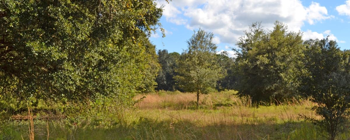 Greenbriar_Road_40_Acres_Cover_Photo_2500x1000.jpg