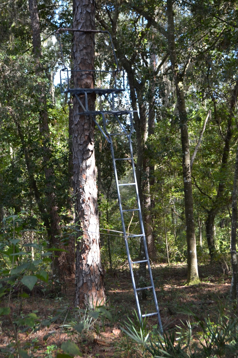 Greenbriar_Road_40_Acres_Hunting_Stand.jpg