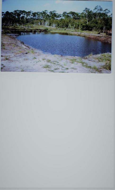 pond_001.jpg