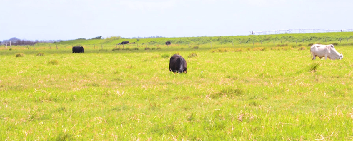 0_Highly_Productive_Pasture_in_Hardee_County_Cover.jpg