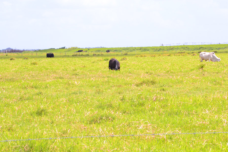 2_Highly_Productive_Pasture_in_Hardee_County_DSC_0010.jpg