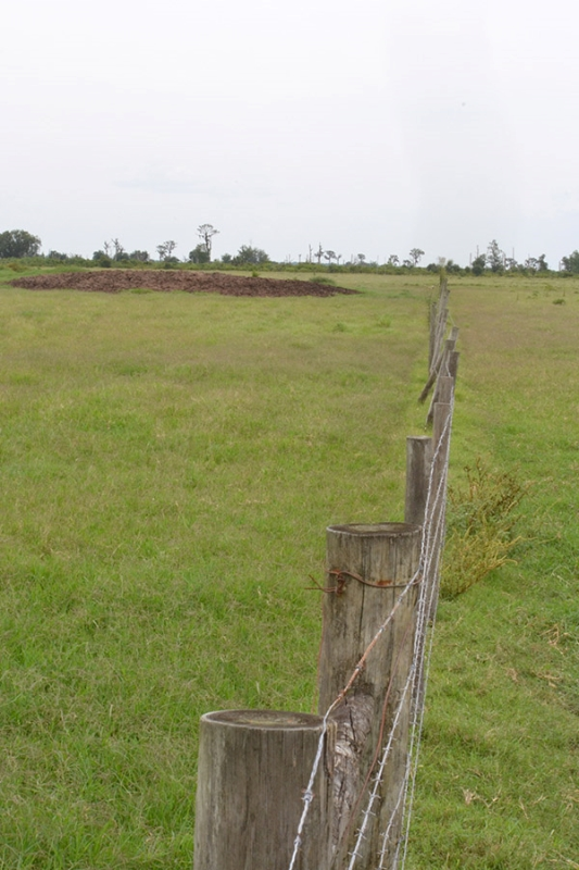 3_Highly_Productive_Pasture_in_Hardee_County_2019_05_14_14.36.58_1_.jpg