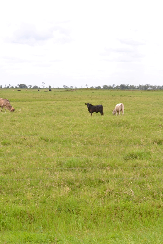 4_Highly_Productive_Pasture_in_Hardee_County_2019_05_14_13.12.33.jpg