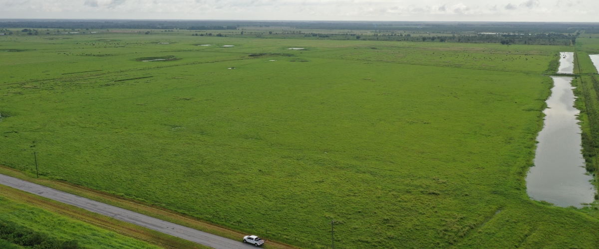 Highly_Productive_Pasture_in_Hardee_County_Featured.jpg