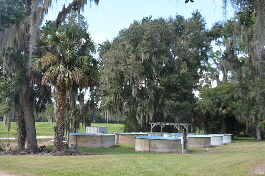 Central_Florida_Fish_Farm_4.jpg