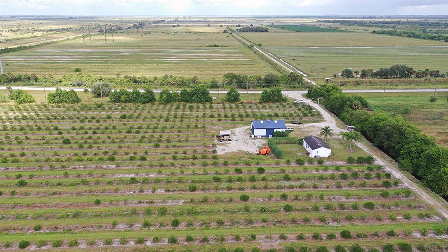 Orange_Avenue_70_Acre_Farm_Grove_Home_Aerial.jpg