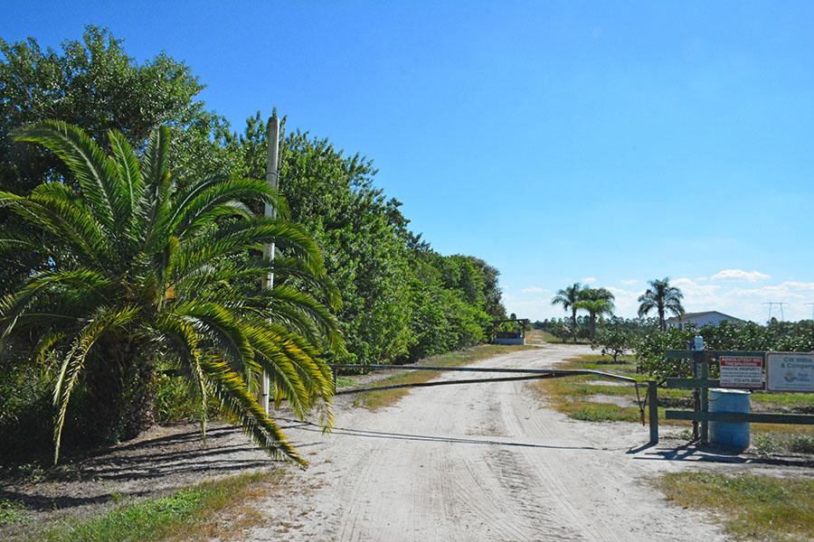 Orange_Avenue_70_Acre_Farm_Grove_Road.jpg