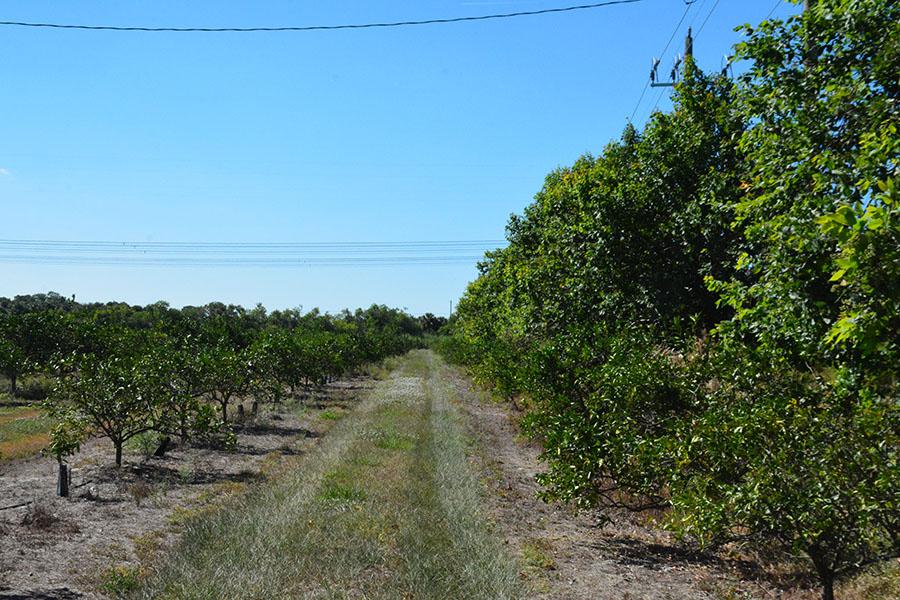 Orange_Avenue_70_Acre_Farm_Groves.jpg