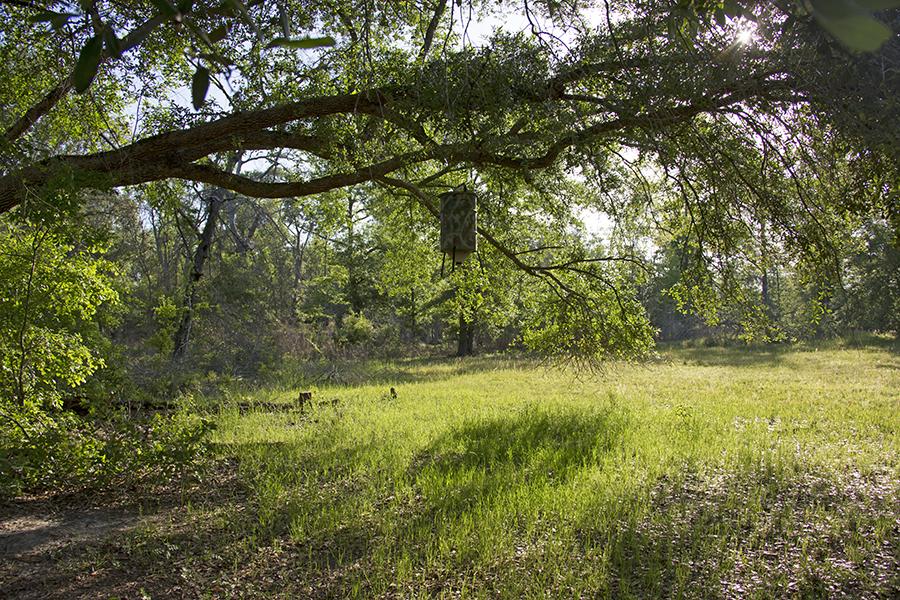 10_Cypress_Bottom_NEW_PHOTO.jpg