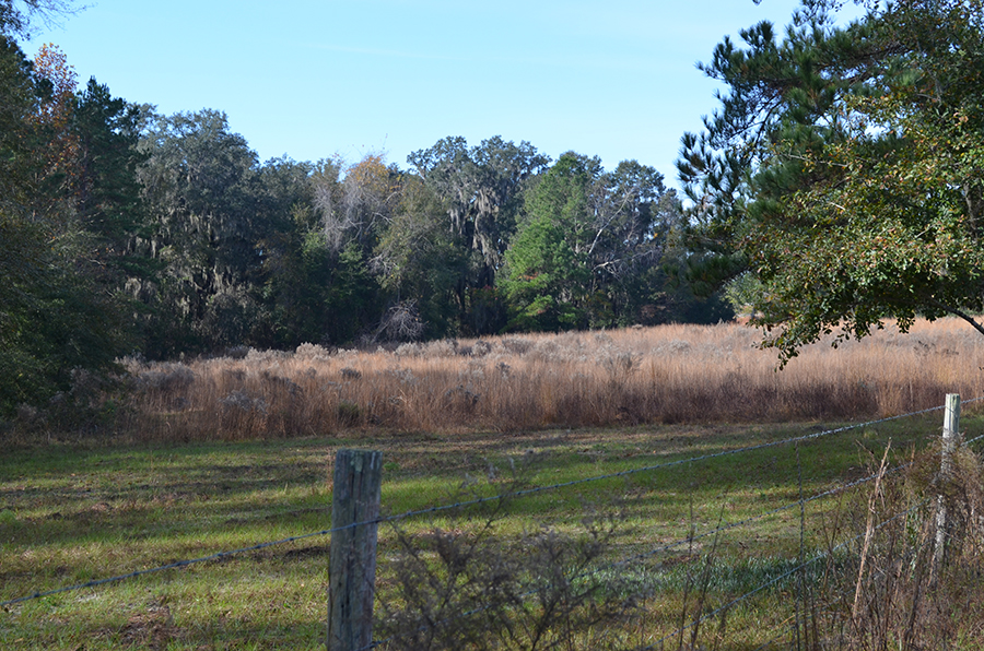 Withlacoochee_Recreational_Investment_Pasture_Grasses.jpg