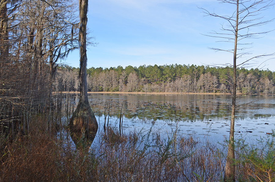 Withlacoochee_Recreational_Investment_Pond.jpg