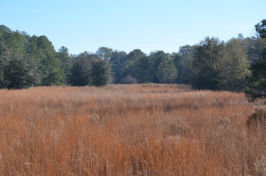 Withlacoochee_Recreational_Investment_Tall_Grasses.jpg