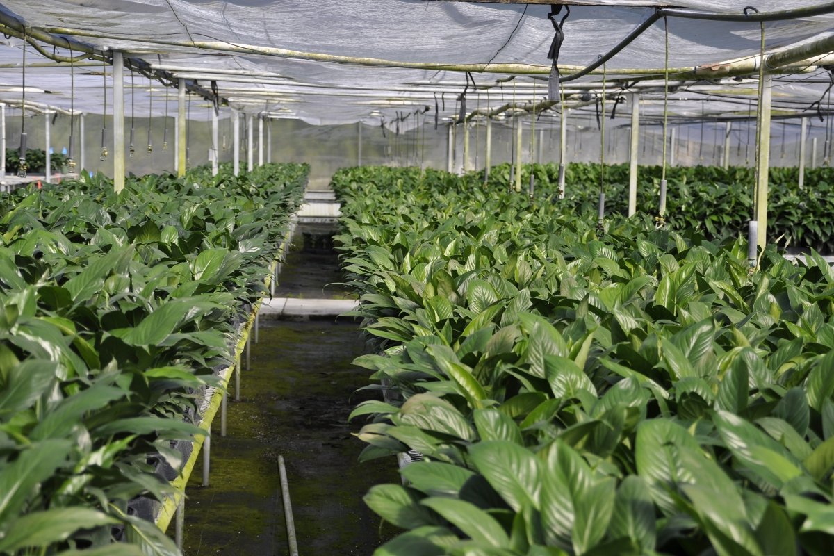 Mt_Dora_Foliage_Nursery_Plants_1.jpg