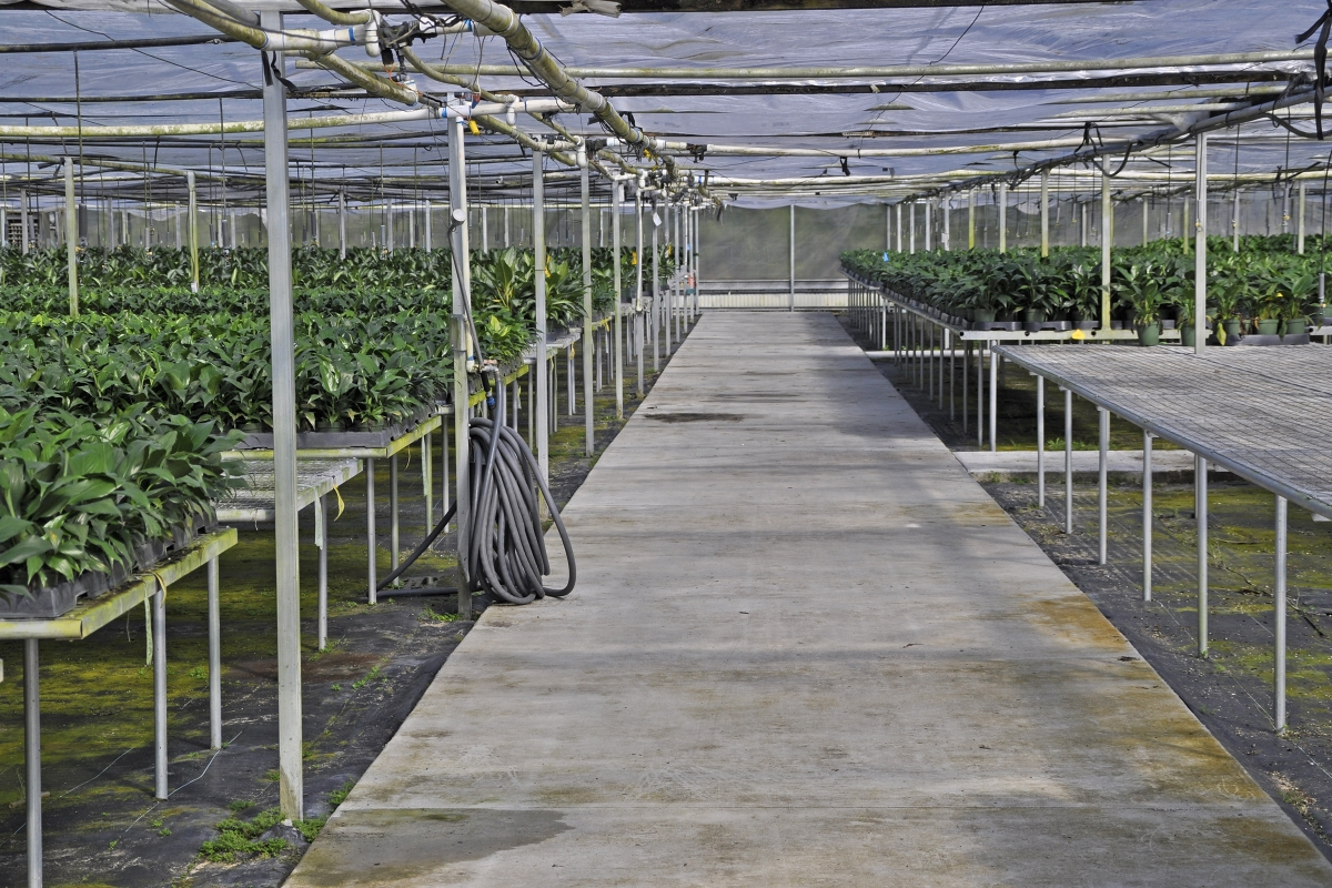 Mt_Dora_Foliage_Nursery_Plants_2.jpg