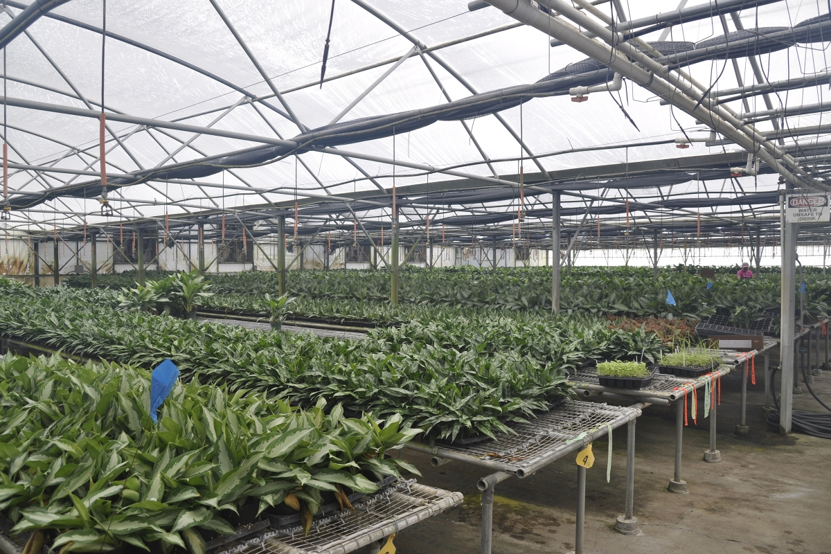 Mt_Dora_Foliage_Nursery_Plants_4.jpg