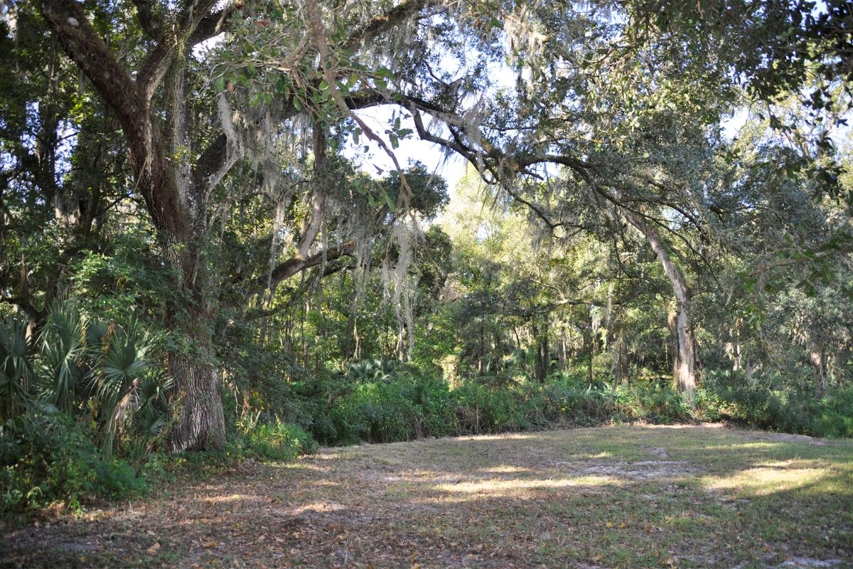 Plant_City_Country_Homesite_Tree_Coverage.jpg